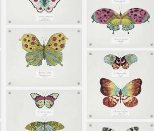 Papilio 97800