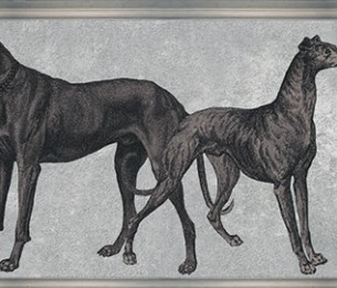 Canis ODE-191904