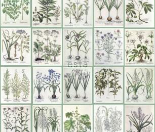Tapeet XXL Botanical Illustartions 158826