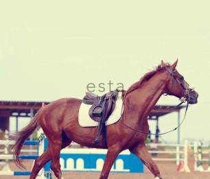 Фотообои XL Brown Horse 155806