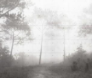 Valokuvatapetit Tonya 1855-001